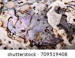 sea shell background  macro... | Shutterstock . vector #709519408