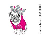 a beautiful pug in the jacket... | Shutterstock .eps vector #709530100