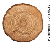 Cross Section Of Oak Grove Tree ...