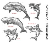 whales and sharks sketch icons... | Shutterstock .eps vector #709567693
