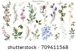 Stock photo big set watercolor elements wildflowers herbs leaf collection garden and wild forest herb 709611568