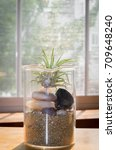 Small photo of Tillandsia Ionantha in beaker full of pebbles in front of window. Air plant