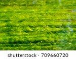 long green algae in flowing... | Shutterstock . vector #709660720
