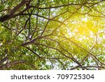 tree branches shape with light... | Shutterstock . vector #709725304