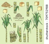 collection of  sugarcane  cane... | Shutterstock .eps vector #709752988