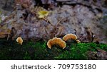 Close Up Mushroom And Green...