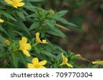 yellow flower on tree with bee | Shutterstock . vector #709770304