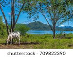 farm with stunning scenic view... | Shutterstock . vector #709822390