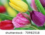 Colorful Fresh Spring Tulips...