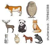 deer  tiger  cow  cat  rooster  ... | Shutterstock .eps vector #709860388