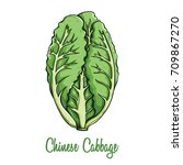 colored fresh chinese cabbage...   Shutterstock .eps vector #709867270