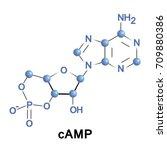 cyclic adenosine monophosphate... | Shutterstock .eps vector #709880386