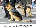 smart police dogs outdoors | Shutterstock . vector #709883170