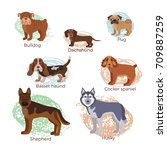 dog breed silhouette colorful... | Shutterstock . vector #709887259