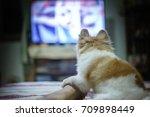 pomeranian dog watching horror... | Shutterstock . vector #709898449
