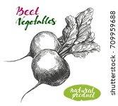 beet vegetable set. detailed...   Shutterstock .eps vector #709959688