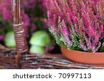 Basket With Purple Heather In...