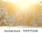 winter forest trees covered by... | Shutterstock . vector #709975108
