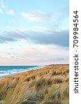 dune grass blowing in the wind  ... | Shutterstock . vector #709984564