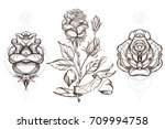 Botanical Graphics. Roses. A...