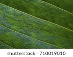 texture of a green leaf as... | Shutterstock . vector #710019010