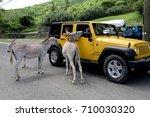 st. john  us virgin islands  ... | Shutterstock . vector #710030320