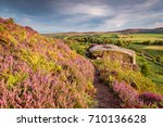 Heather Bracken And Crags On...