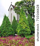 Small photo of the pink amaranth with green tree and the CHURCH