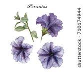 flowers set of watercolor... | Shutterstock . vector #710174944