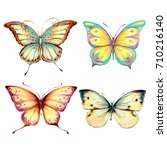 beautiful color butterflies set ... | Shutterstock . vector #710216140