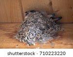 bird's nest in the ceiling | Shutterstock . vector #710223220