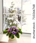 Small photo of African violet on a window sill with a view of a snowy winters day.