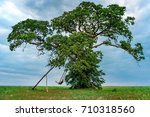 lonely tree with a swing and a... | Shutterstock . vector #710318560