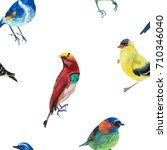 watercolor illustration of... | Shutterstock . vector #710346040