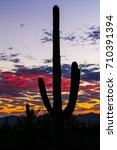 Silhouette Of Saguaro Cactus...