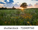 A prairie spectacular sunset with a sunburst beneath a tree that is highlighting a field of  white and yellow prairie flowers. Shoefactory Road prairie Nature Preserve, Elgin IL.