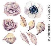 watercolor flowers set. perfect ... | Shutterstock . vector #710410750