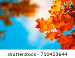 autumn leaves  very shallow... | Shutterstock . vector #710423644