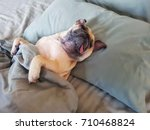 cute pug dog sleep on pillow in ... | Shutterstock . vector #710468824
