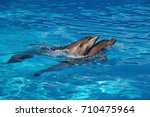 two afalina dolphins | Shutterstock . vector #710475964