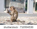 baby monkey after bath eat... | Shutterstock . vector #710504530