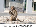 baby monkey after bath eat... | Shutterstock . vector #710504560