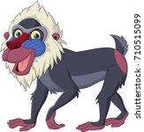 cartoon mandrill baboon...   Shutterstock . vector #710515099