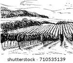 vineyard sketch. vineyard... | Shutterstock .eps vector #710535139