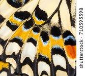 butterfly wings texture  close... | Shutterstock . vector #710595598
