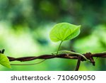 a little plant growing at... | Shutterstock . vector #710609050