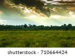 rain  | Shutterstock . vector #710664424