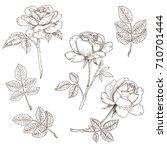 vintage rose. hand drawn ink... | Shutterstock .eps vector #710701444