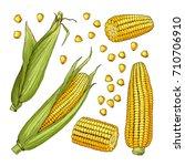 vector farm illustrations.... | Shutterstock .eps vector #710706910