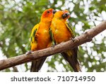 pair of two lovebirds. meaning... | Shutterstock . vector #710714950